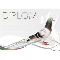 Diplom HOLUB