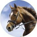 Emblémy koně